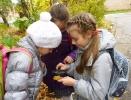 изучаем строение листьев 1