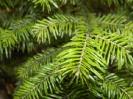 Коллекция растений теплицы